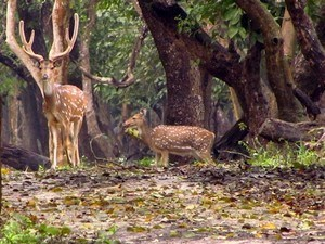 Nagarhole-National-Park Tour Packages