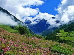 Valley-Of-Flowers Tour Packages