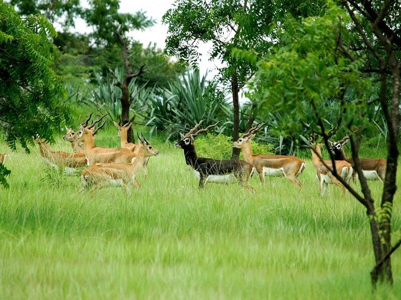 Image result for Machiya Safari Park