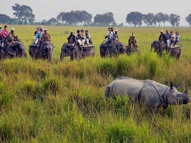 Kaziranga | list of National ParkIndia