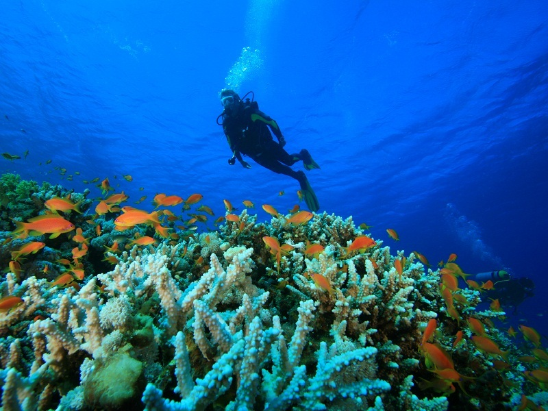Scuba Diving & Snorkeling - Havelock Island