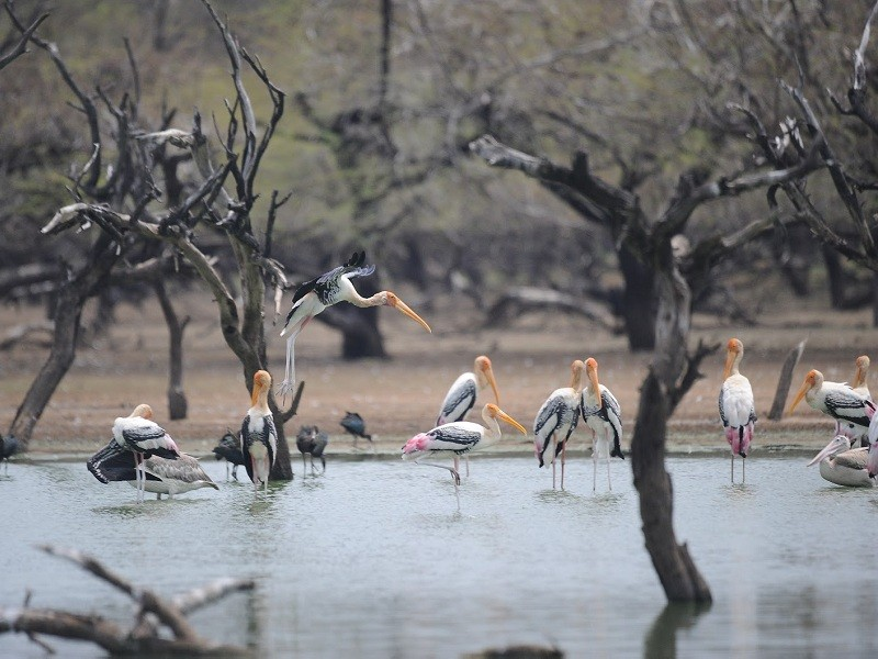 Image result for Koonthankulam Bird Sanctuary Tirunelveli images