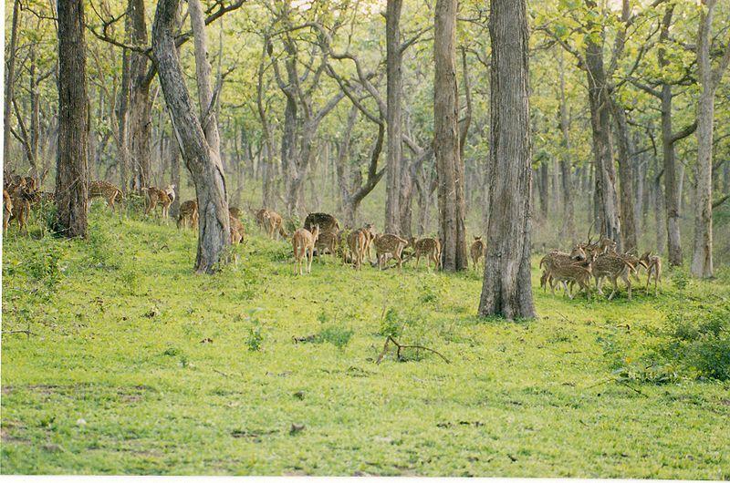 a trip to tadoba tiger reserve Haridwar , dehradun, rishikesh, rajaji tiger reserve, kanat 6n/7d ₹ 12500.
