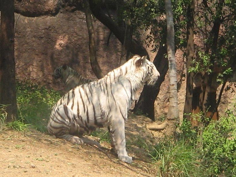 Nehru Zoological Park Hyderabad