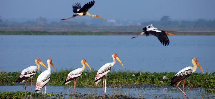 Image result for Kolleru Lake Bird Sanctuary images