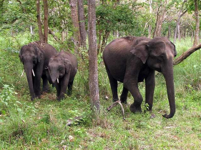 Mudumalai Wildlife Sanctuary