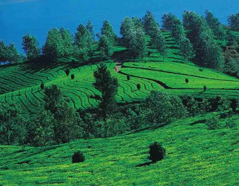Vythiri, Kerala