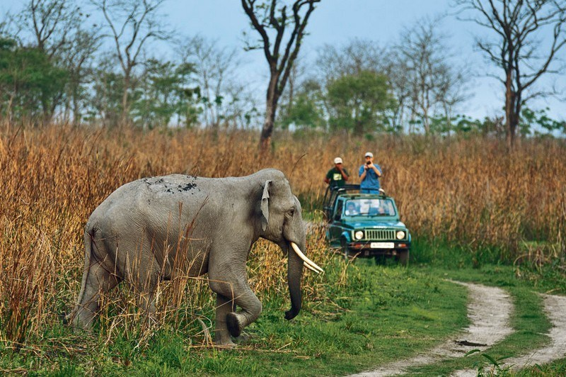 Dhikala Jeep Safari / Canter Safari