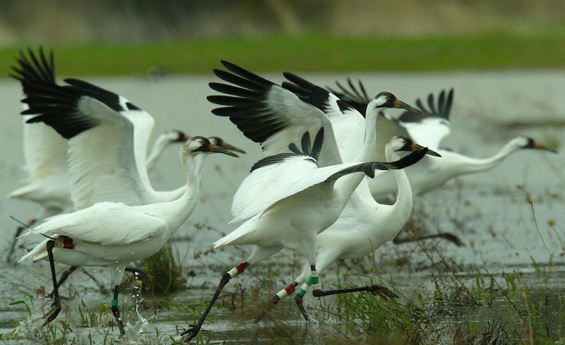 Image result for Sultanpur Bird Sanctuary images