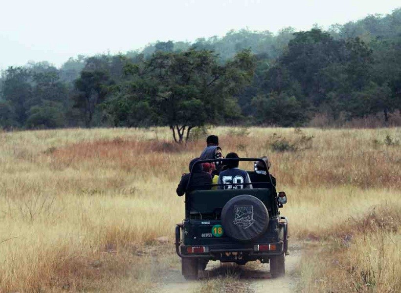 Hinauta Jeep / Canter Safari, Panna National Park - Timings, Safari ...