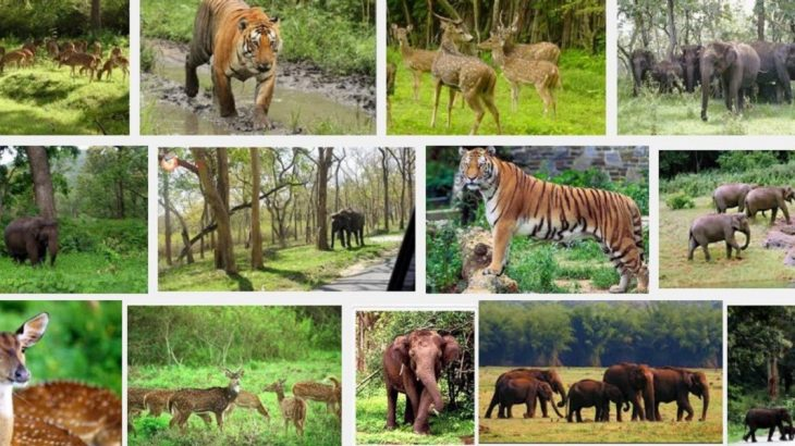 Top 14 Wildlife Sanctuaries in India | Trawell Blog