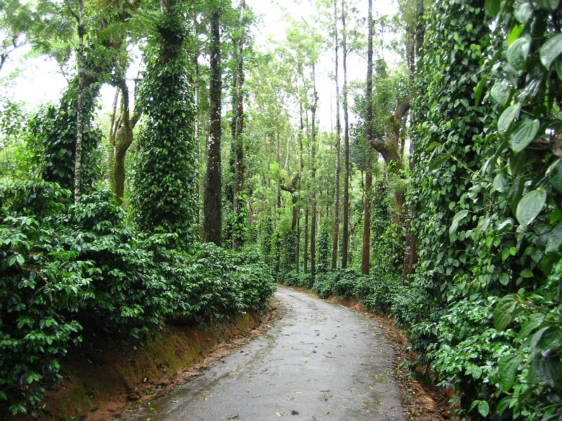5 Unique Experiences in Coorg | Trawell Blog