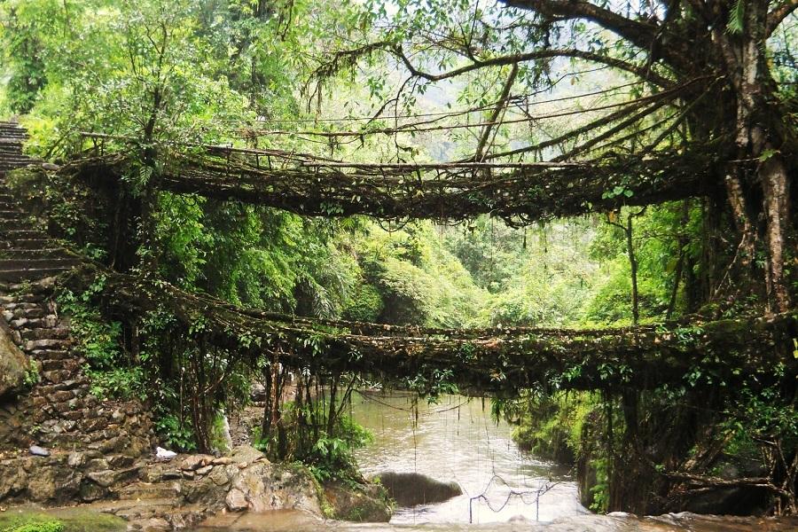 Living_Root_Bridges