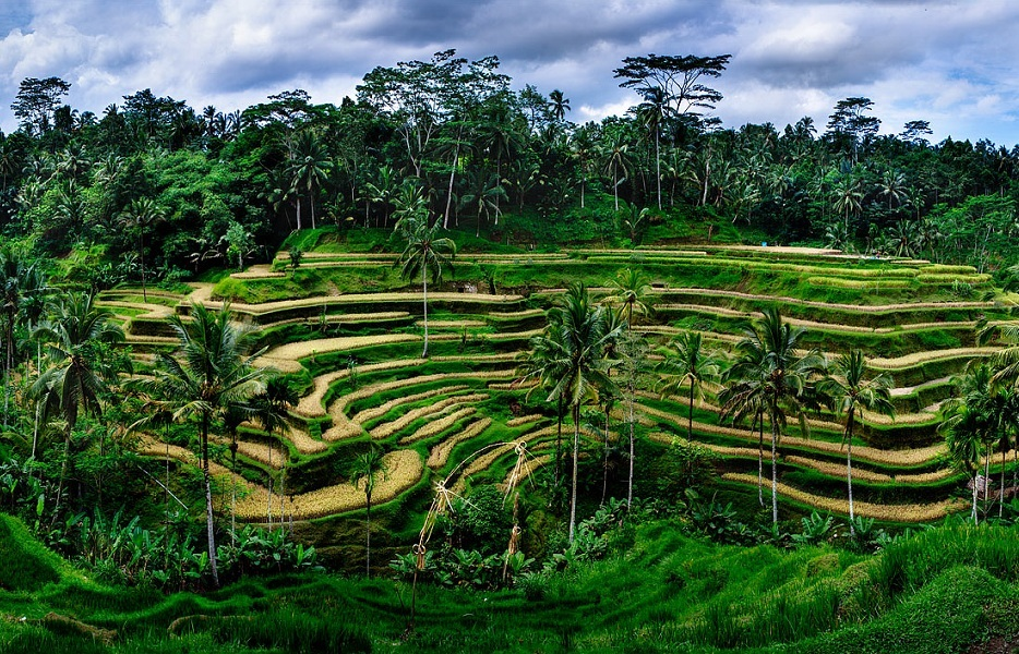Tegalalang_Rice_Fields