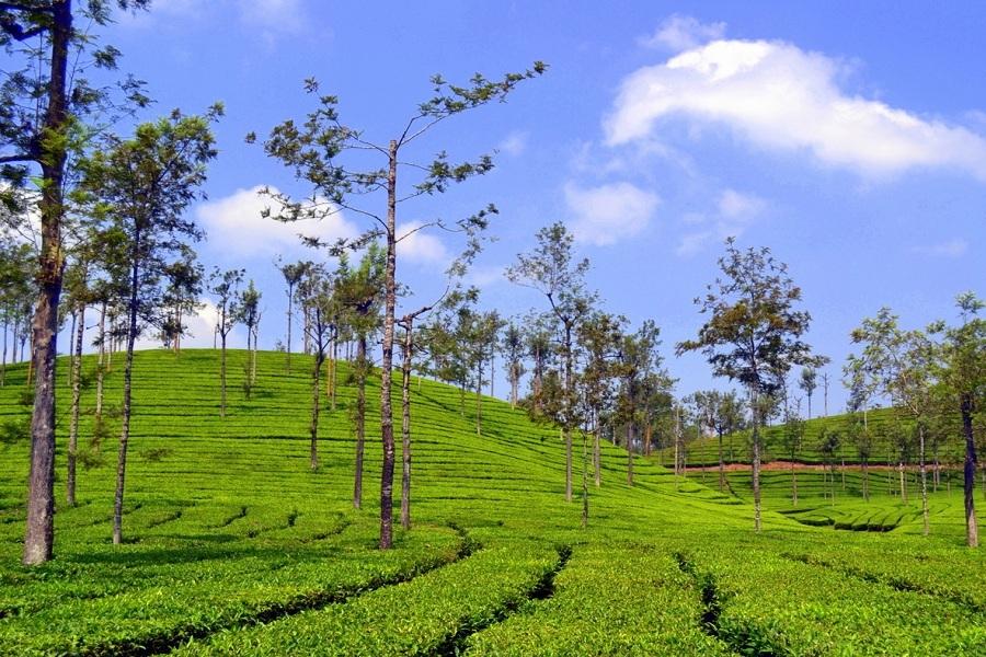 Valparai,Tamilnadu