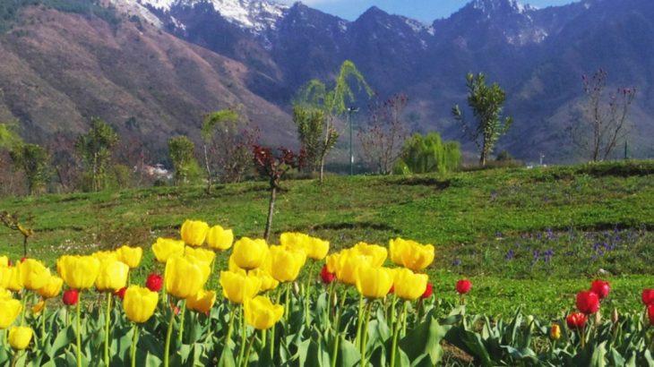 Tulip_Garden_Srinagar