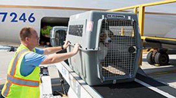 Ensuring Your Dog's Safety When Traveling by Plane
