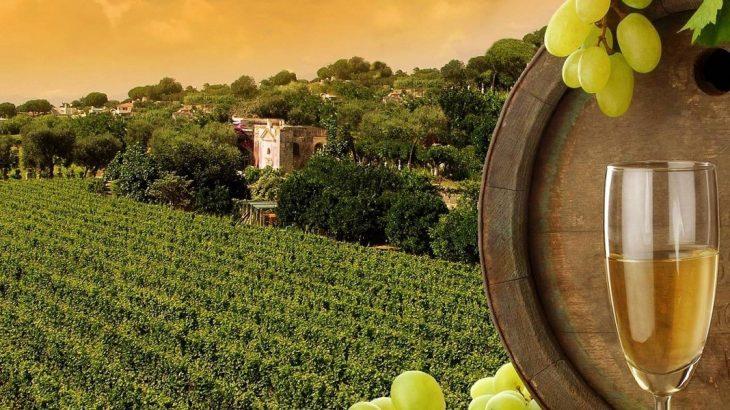Wine_Regions_India
