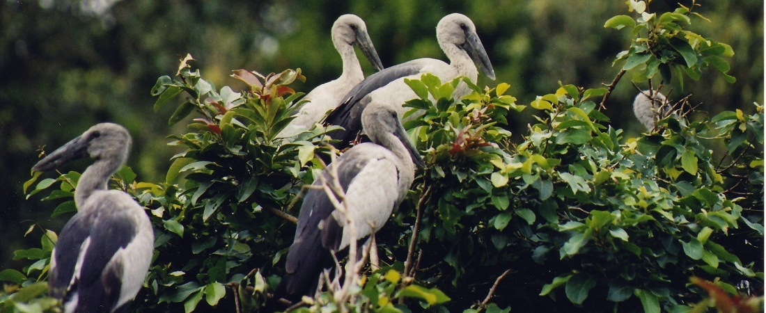 a visit to a bird sanctuary Visit salim ali bird sanctuary is one of the prime tourist places to visit in munnar, offers different kinds of exotic flora and fauna find more info to visit.